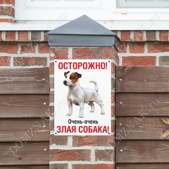 Табличка Очень злая собака джек-рассел-терьер